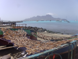 Drying fish in the Cape Verdes