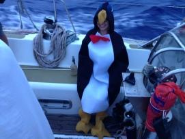 A penguin, say no more.